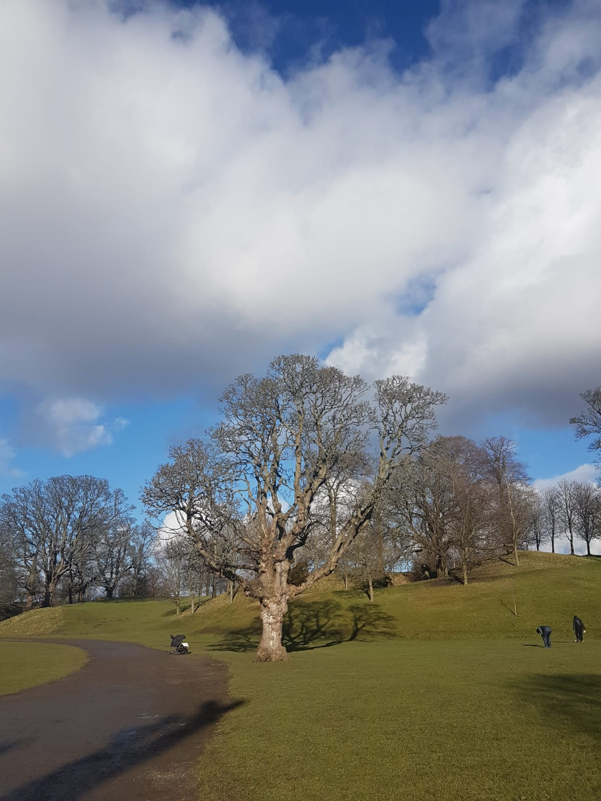 The Beautiful Trees of Callendar Park